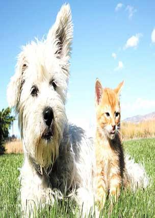 elly assurance devis assurance chien et chat