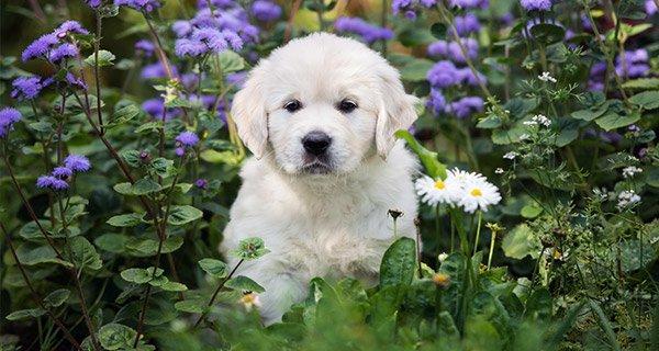 Avantages Assurance chien